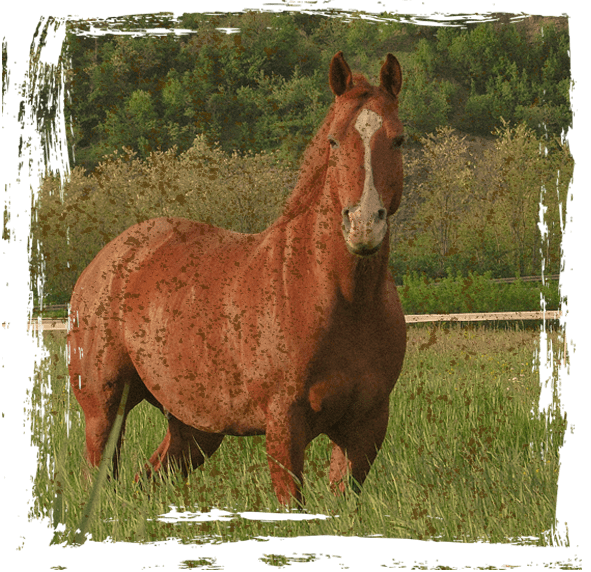 cavallo_home